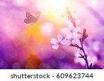 Stock photo butterfly and cherry blossoms 609623744
