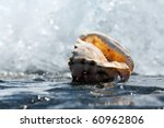 shell in the waves - stock photo