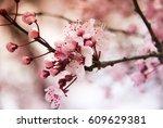 cherry blossom branch | Shutterstock . vector #609629381