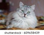Stock photo gray cat 609658439