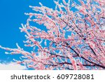 spring cherry blossoms  pink...   Shutterstock . vector #609728081