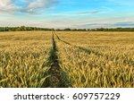 rye field  belarus. | Shutterstock . vector #609757229