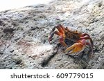 The Alive Sea Crab Crawling On...