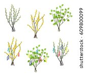 set of forsythia  willow and...   Shutterstock .eps vector #609800099
