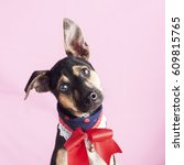 happy  curious dog mixed breed  ... | Shutterstock . vector #609815765