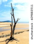 Perennial Dead Tree On The Sand
