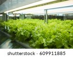 greenhouse plant row grow with... | Shutterstock . vector #609911885