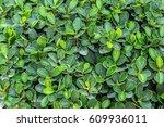 green leaf background | Shutterstock . vector #609936011