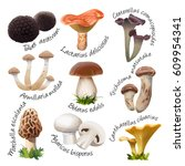 Collection Of Various Species...