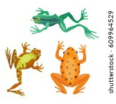 frog cartoon tropical animal... | Shutterstock .eps vector #609964529