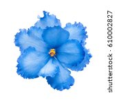 Stock photo blue flower 610002827