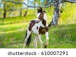 horse in nature | Shutterstock . vector #610007291