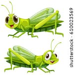 two grasshoppers with happy... | Shutterstock .eps vector #610023569