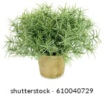 rosemary plant | Shutterstock . vector #610040729