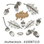acorn collection vector set... | Shutterstock .eps vector #610087115