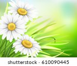 chamomiles flowers and green... | Shutterstock .eps vector #610090445