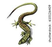 lizard top view crawling ... | Shutterstock .eps vector #610126409
