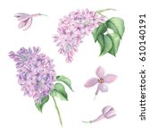 watercolor lilac flower set | Shutterstock . vector #610140191