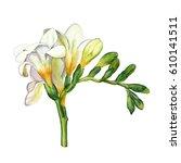 watercolor hand painted flower. ... | Shutterstock . vector #610141511
