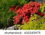 Blooming Small Shrub Red...