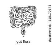 gut human digestive system....   Shutterstock .eps vector #610170875