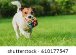 Stock photo funny dog looking at camera playing with toy ball 610177547