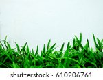 green grass with white... | Shutterstock . vector #610206761