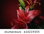amazing close up details of... | Shutterstock . vector #610219355