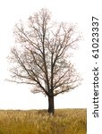single  oak tree in late autumn ... | Shutterstock . vector #61023337