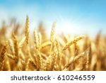 wheat and sun under blue sky   Shutterstock . vector #610246559