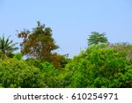 forest background with thick... | Shutterstock . vector #610254971