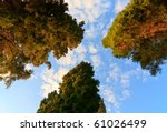 treetops against a blue cloudy... | Shutterstock . vector #61026499