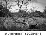 tree uprooted by the storm | Shutterstock . vector #610284845