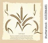wheat branches design vector... | Shutterstock .eps vector #610286681