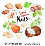 watercolor collection of nuts ... | Shutterstock . vector #610290131