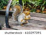 squirrel | Shutterstock . vector #610297391