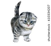 Stock photo little fluffy grey kitten scottish fold spotted cat watercolor illustration of pet illustration 610334207