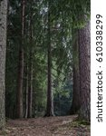 nature pine forest with trail... | Shutterstock . vector #610338299