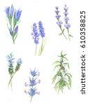 flowers watercolor | Shutterstock . vector #610358825