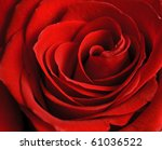Stock photo beautiful close up red rose 61036522