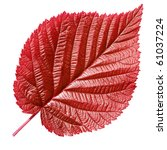 Red Leaf Isolated On White...