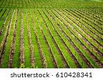 winery green field landscape.... | Shutterstock . vector #610428341