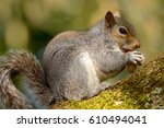 side view of a cute grey... | Shutterstock . vector #610494041