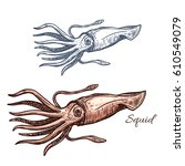 squid isolated sketch.... | Shutterstock .eps vector #610549079