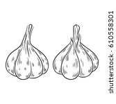 garlic drawing. isolated on... | Shutterstock .eps vector #610558301