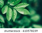 water drops on leaves  natural... | Shutterstock . vector #610578239