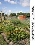 An Allotment Filled With...