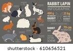 Rabbit  Lapin Breed Infographic ...