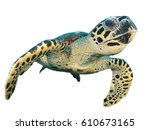 Sea turtle isolated. hawksbill...