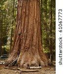 yosemite national park  ...   Shutterstock . vector #61067773